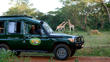 Uganda Wildlife Safari in Murchison Falls National Park